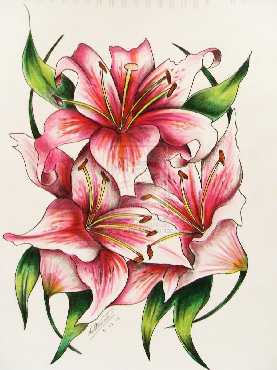 lily flower designs pink lily tattoo by rhianne almond