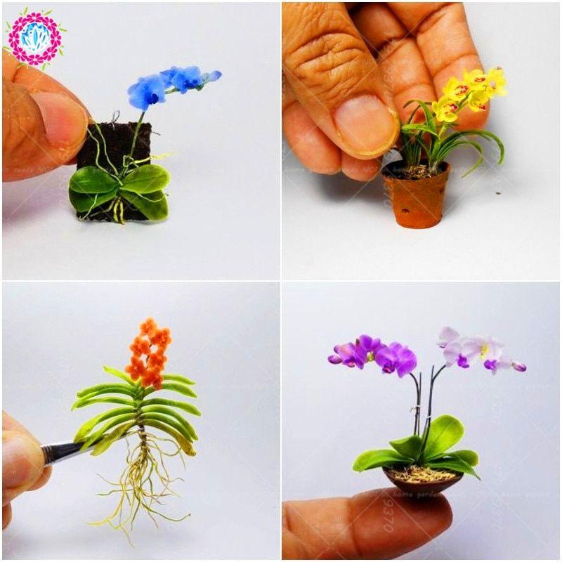 Купить товар Мини Орхидея Семена цветы комнатные комнатные ...