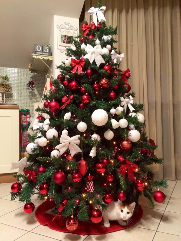 Albero Di Natale Rosso.Albero Di Natale Bianco E Rosso Christmas Tree Red White Alberi Di Natale Rosso Alberi Di Natale Bianchi Natale