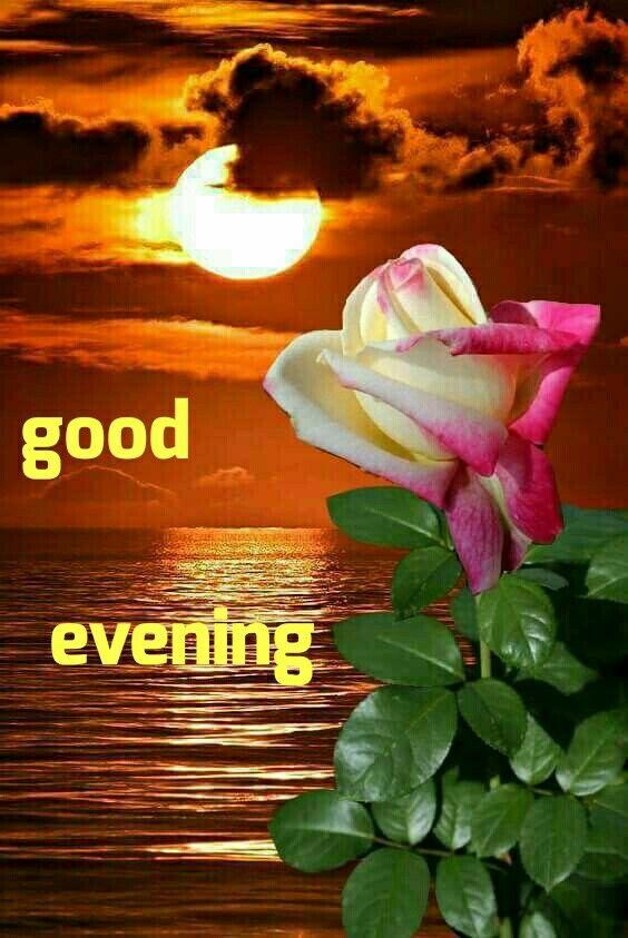 Good evining friends | Beautiful roses, Beautiful moon