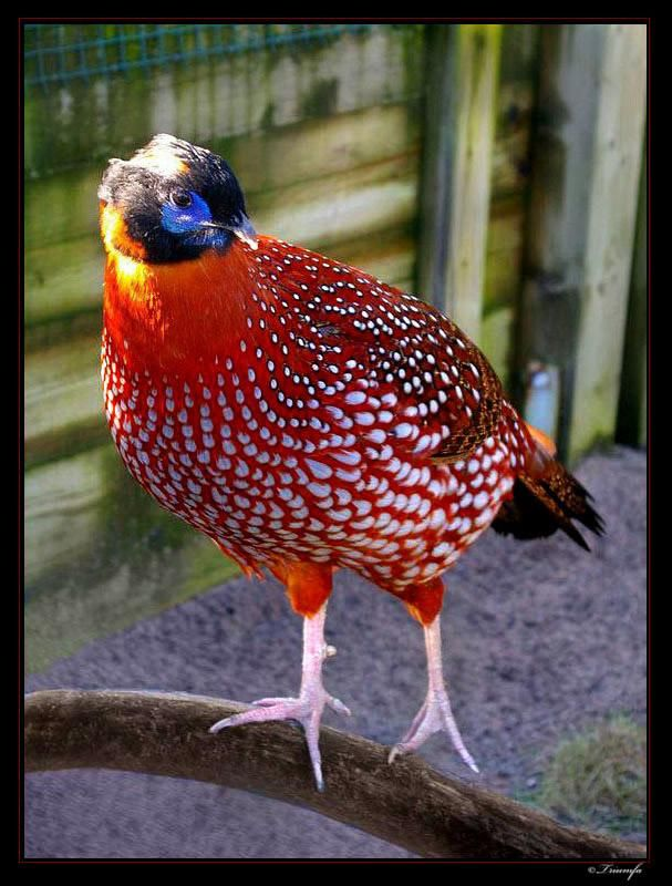 red bird - Pixdaus