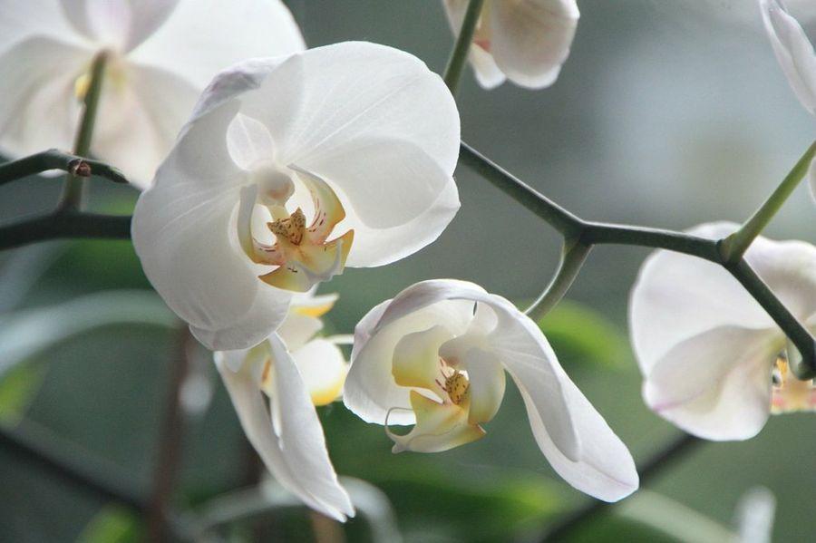 La Orquídea Es La Flor Más Bella Del Mundo O No Cultivo De Orquídeas Orquideas Cuidados Flores Orquideas