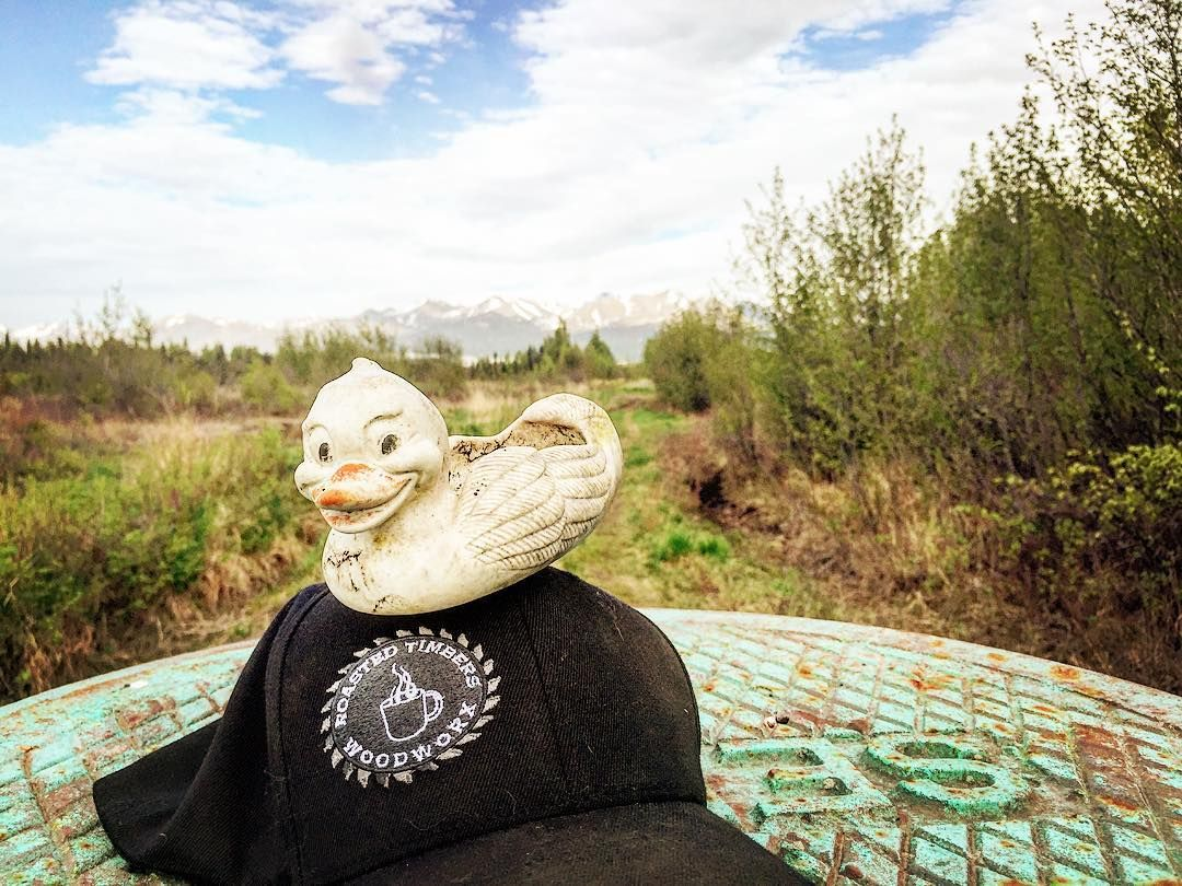 Found...one rubber ducky wandering the woods of Anchorage. No collar or tags. Contact @roasted_timbers_woodworx if he's yours...especially if there's a reward. #iloveanchorage #liveworkplay #anchorage #alaska #luckyduck #quack #quackattack #rubberducky #fattire #biking #getoutside #getdirty #livelife #bigwildlife #outdoors #outside #getradical #play #alaska #trailriding #singletrack #trailblazing #wildlife #rubberduck by iloveanchorage