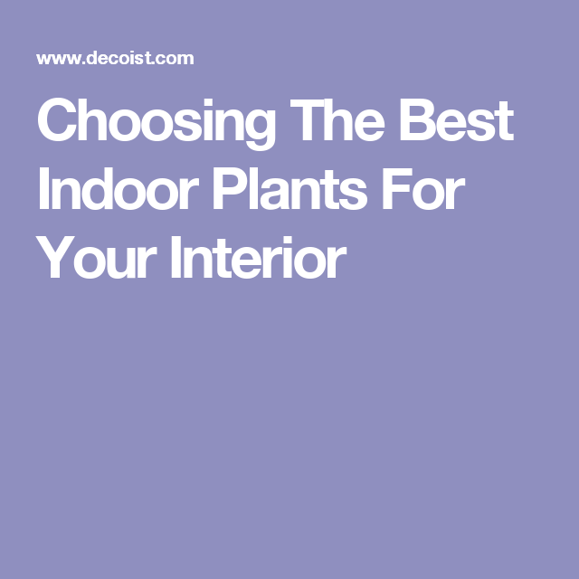 Choosing The Best Indoor Plants For Your Interior