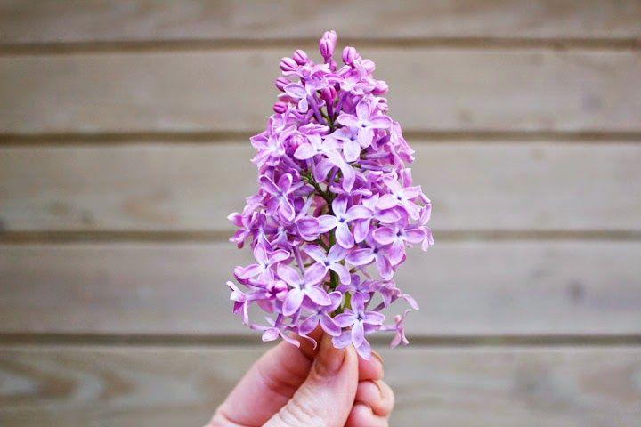 HOMEMADE: Perfumed Lilac Oil | FOXTAIL + MOSS | Bloglovin'