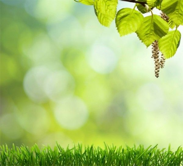 High Resolution Spring Grass Background JPG - http://www.dawnbrushes.com/high-resolution-spring-grass-background-jpg/