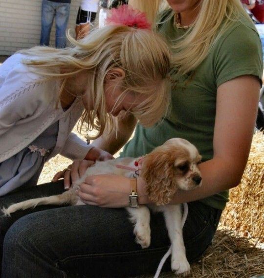 Blessing of the Animals Festival Tampa, Florida  #Kids #Events
