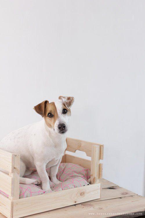Ikea Hund Mitnehmen