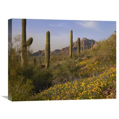 Global Gallery Nature Photographs Saguaro Cacti and California Poppy Field at Picacho Peak State Park, Arizona by Tim Fitzharris Photographic Print...