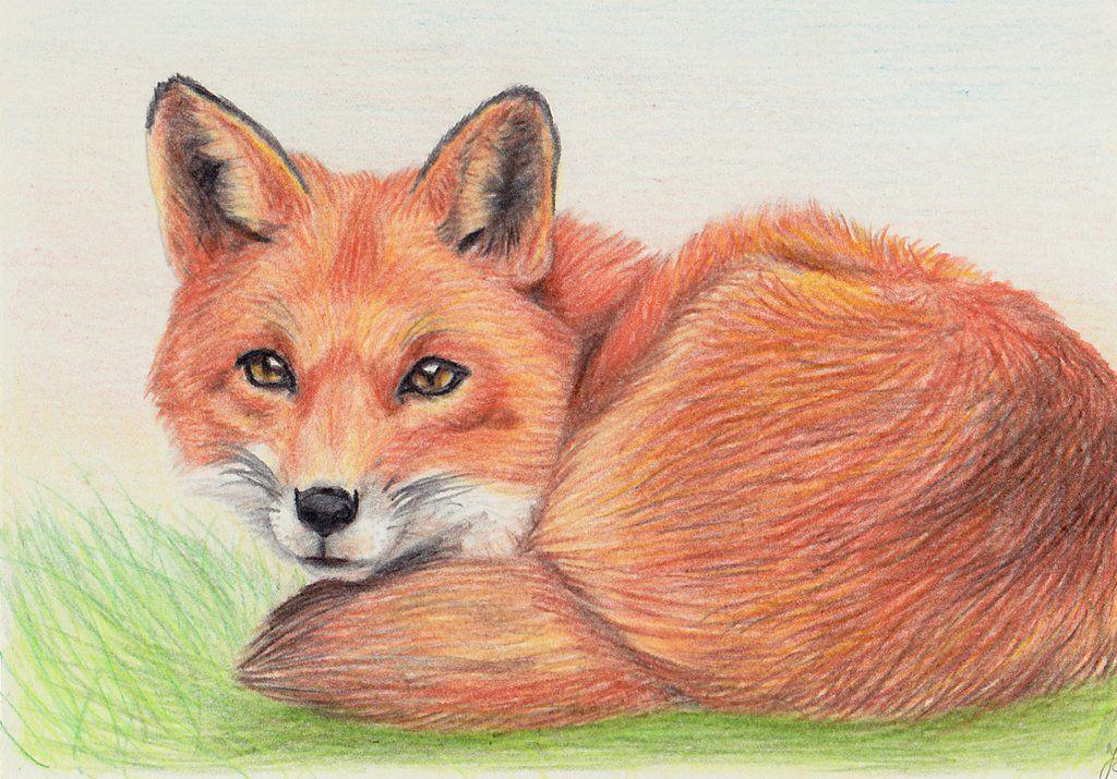 Fox 7 Days Drawing Challenge Orange By Light Lein On Deviantart