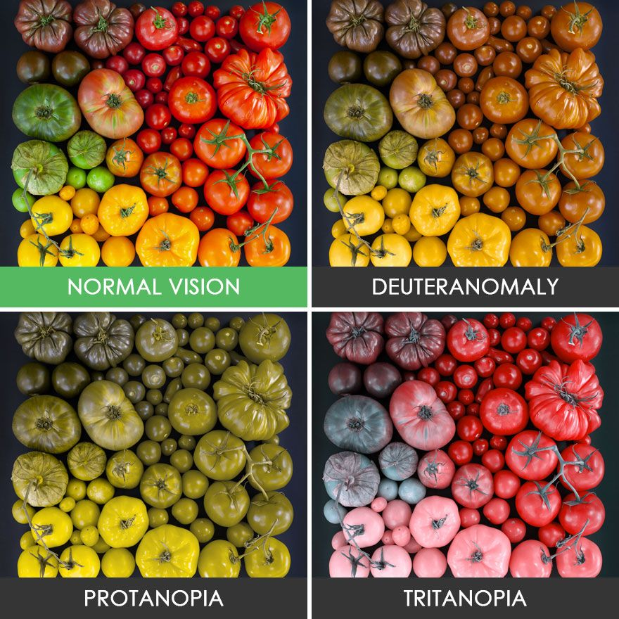 You Ll Be Amazed How People With Color Blindness See The World 57 Pics Color Blind Color Vision Color