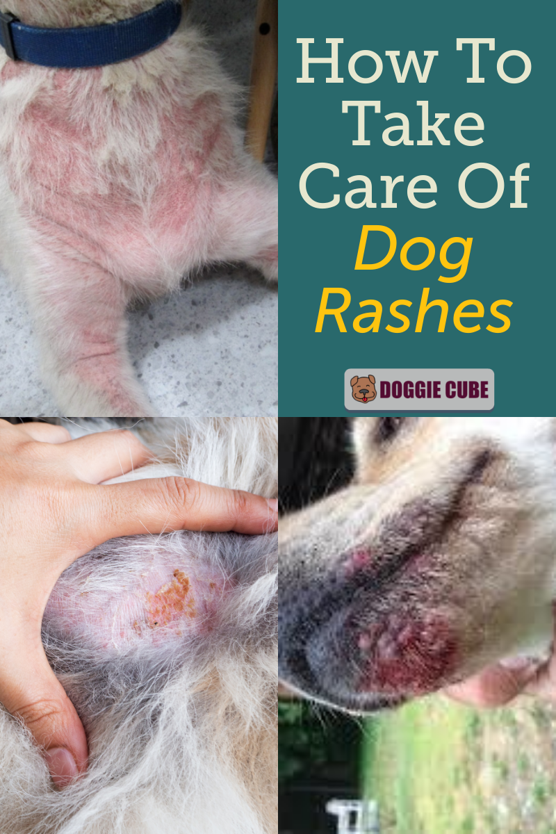 How To Take Care Of Dog Rashes Doggie Cube In 2020 Dog Rash Dog Remedies Dog Parents