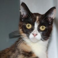 Adopt A Cat Or Kitten Cuddly Companions Ready For A Loving Home