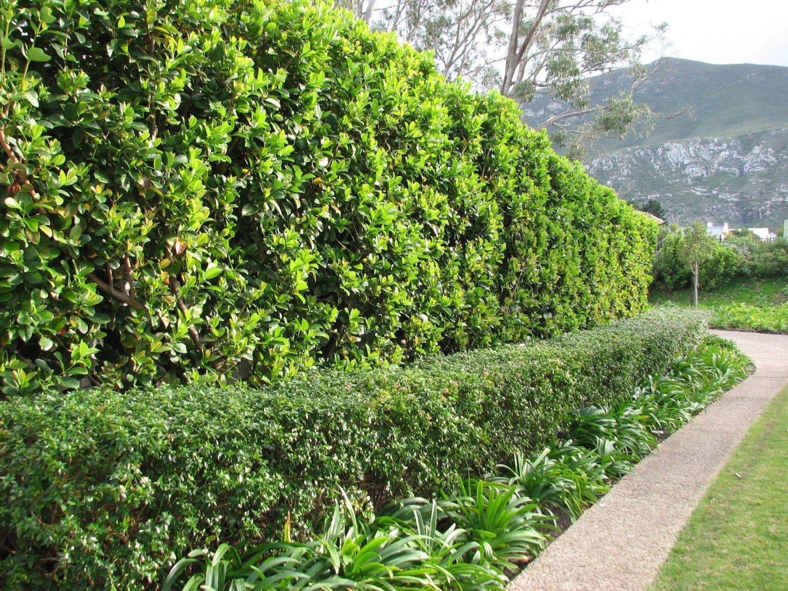 Blog 016 Jpg 1600 1200 Beautiful Gardens Hedges Landscape