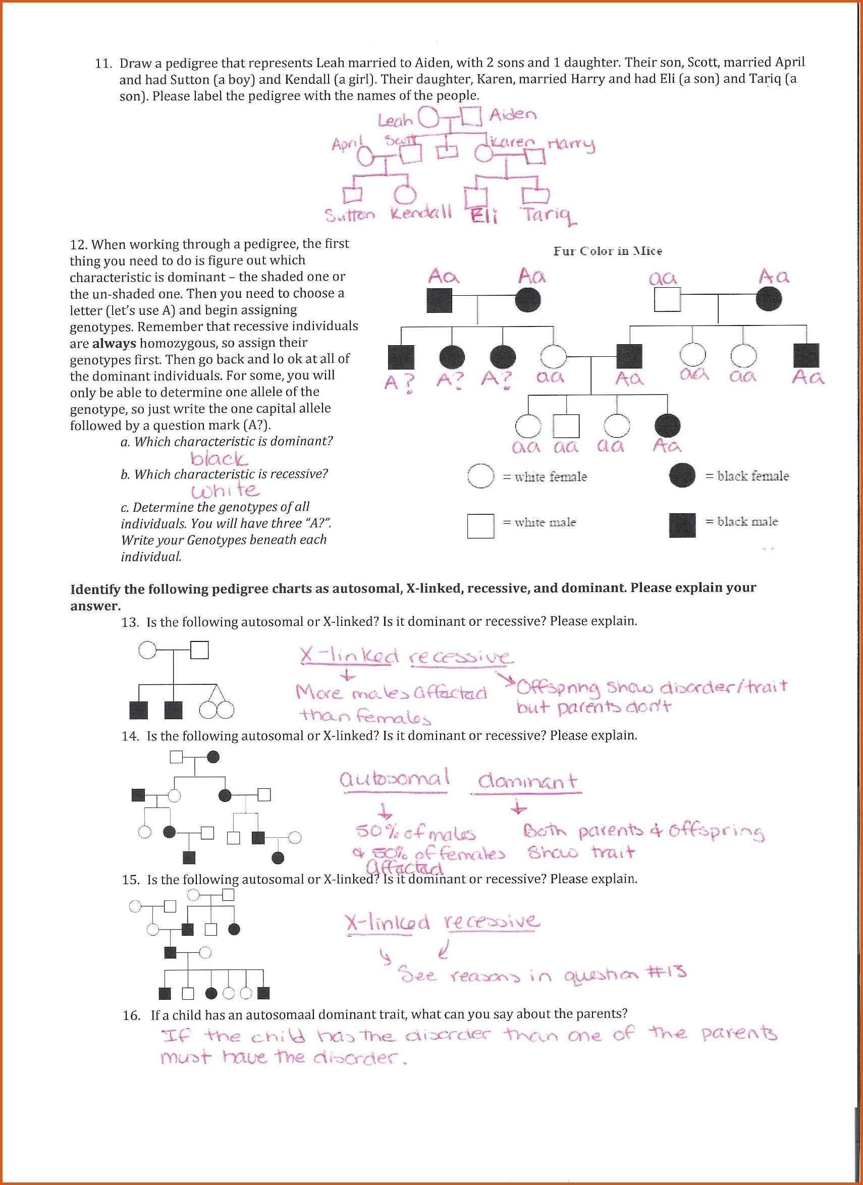 Pedigree Worksheet Answers - worksheet