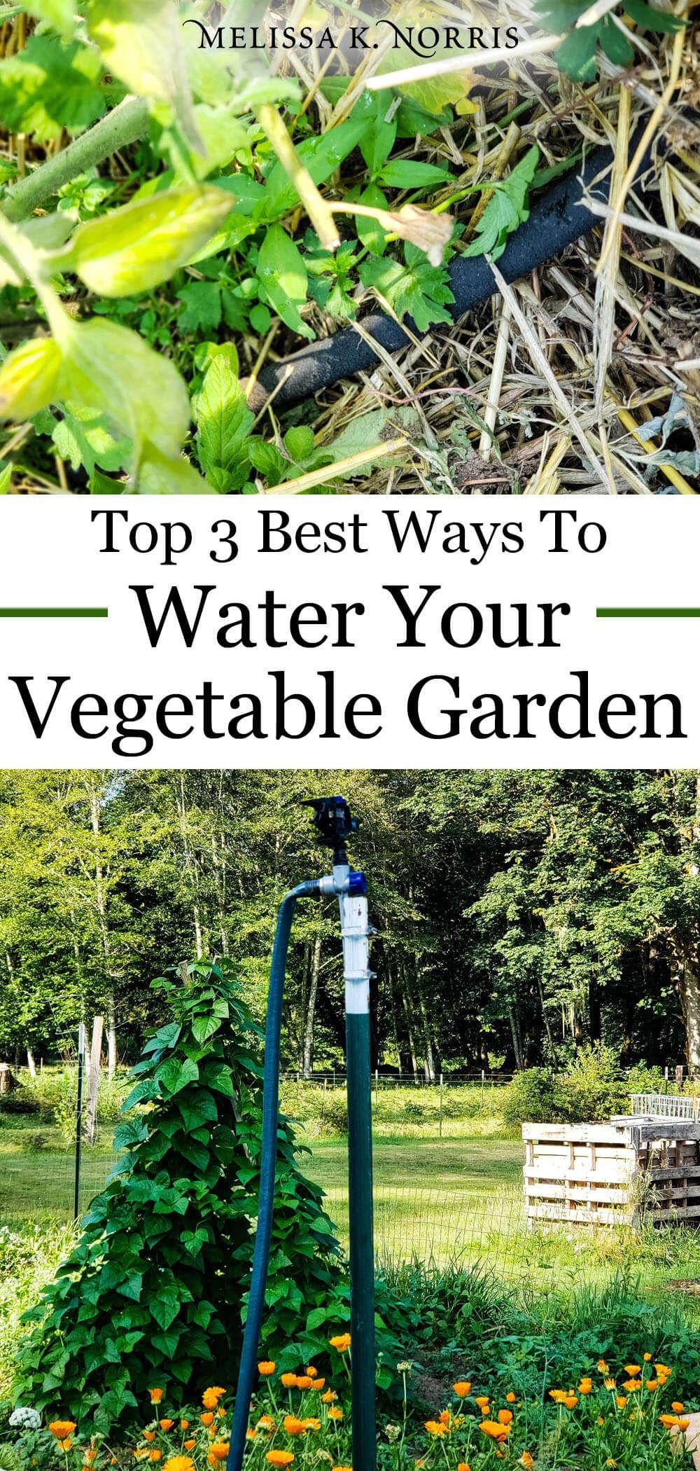 best way to water vegetable garden