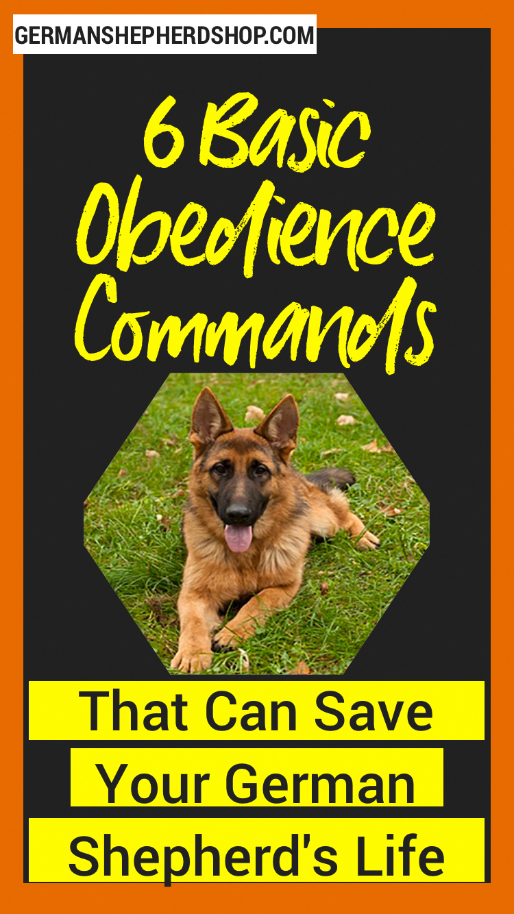 6 Basic Obedience Commands That Can Save Your German Shepherd S Life German Shepherd Training Dog Training Obedience German Shepherd
