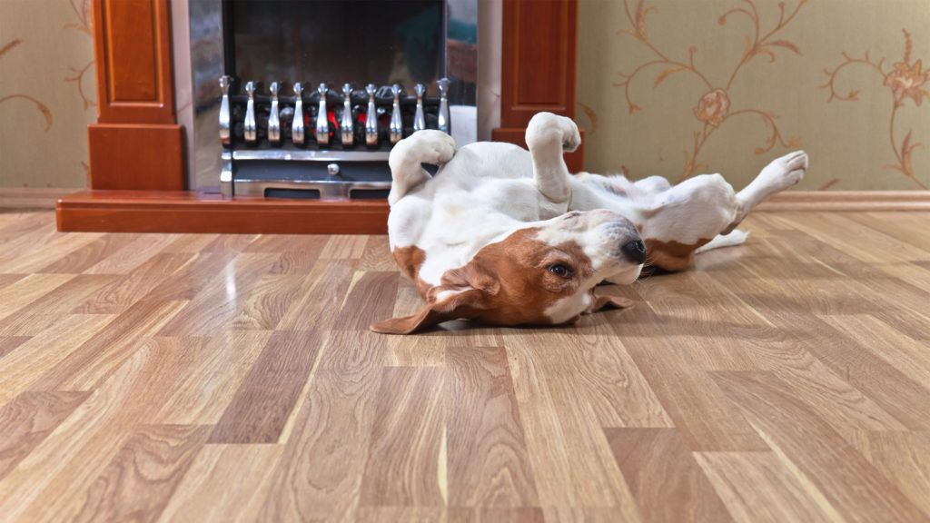 What Is The Best Flooring For Dogs And, What Is The Best Laminate Flooring For Pets