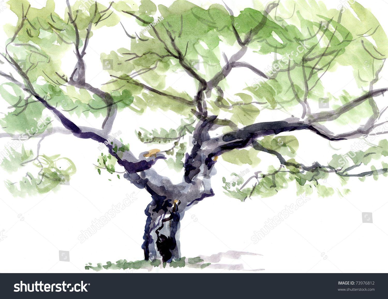 Guy Mellegenes Oak Tree Watercolor Tree Watercolor Stock Photo