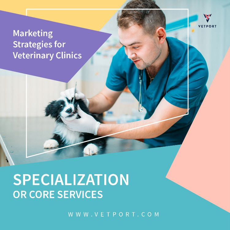 6 Proven Marketing Strategies For Veterinary Clinics And Hospitals