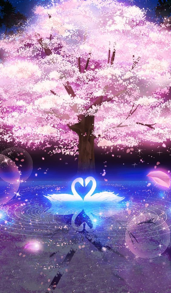 Sakura -Cherry blossoms