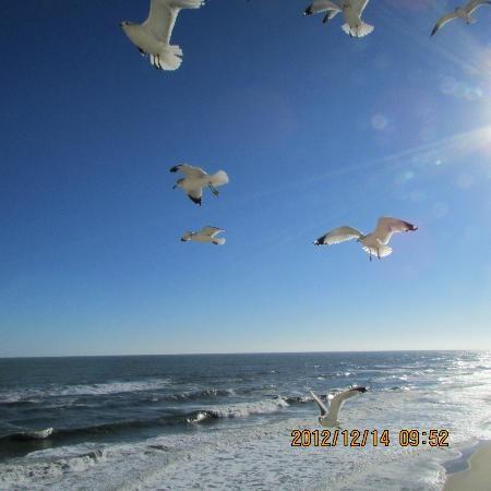 Nags Head, NC: bird view