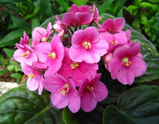Daftar Nama Bunga Gambar Bunga Cantik Indah Unik Dan Langka Lengkap Dengan Penjelasannya Kumpulan Macam Macam Bung Bunga Bunga Indah Gambar Bunga Tanaman