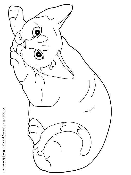 Quatang Gallery- Kleurplaat Kleurplaat Poezen 3787 Kleurplaten Katten Tekening Kleurboek