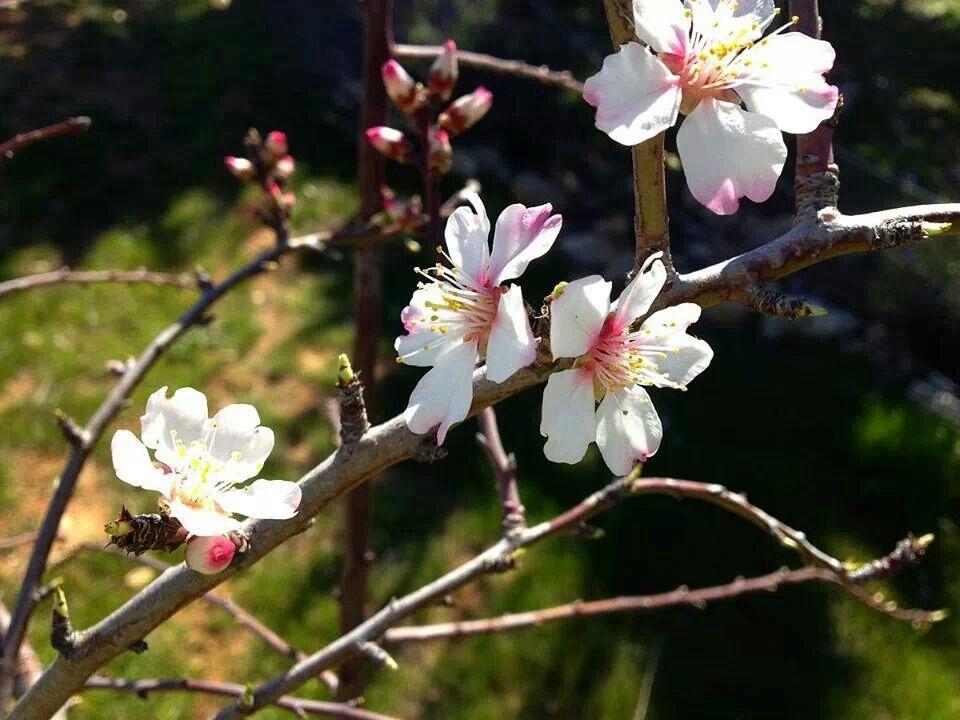 spring#blossom