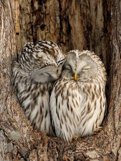 19 Die süßesten Eulen, die Sie lieben werden! – #die #Eulen #lieben #Sie #sü…