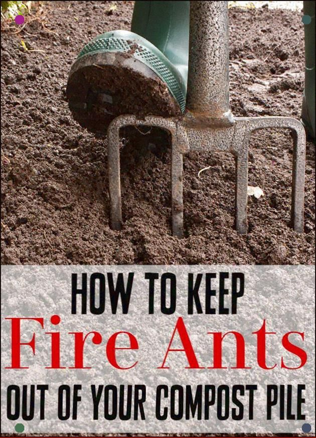 How To Remove Ants From Your Compost Pile  Have You Found Ants In Your Compost Try not to Stress Removing Fire Ants From Your Compost Pile Or Any Type Of Ant Really Is Ea...