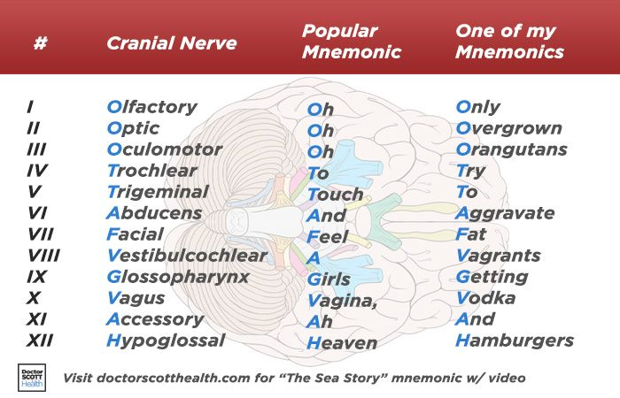 A popular cranial nerves mnemonic and one of my own acronym based ...