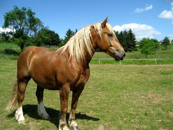 Pferde richtig kennenlernen