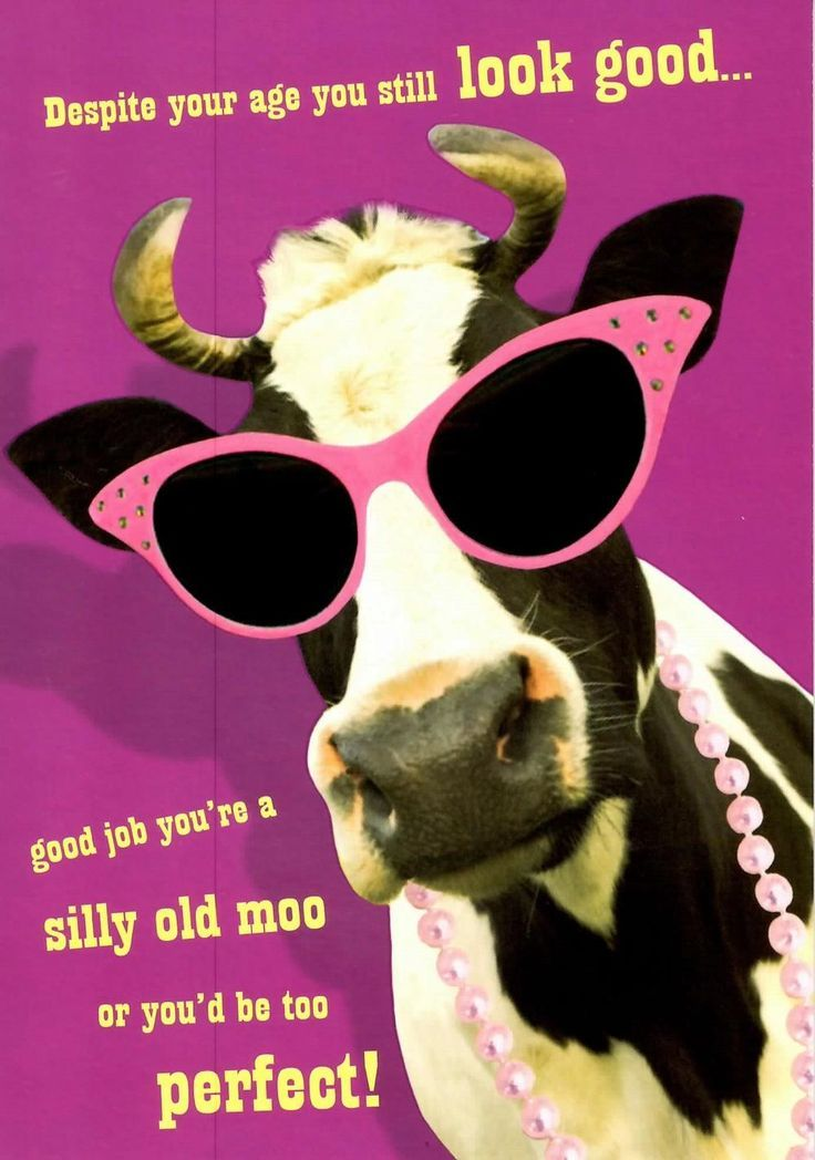 7d0f2d2ec571a93c082e28b18839781a happy birthday cards good job silly old moo funny joke happy birthday card humour greeting cards order today with free uk delivery at love kates cards gifts bookmarktalkfo Image collections