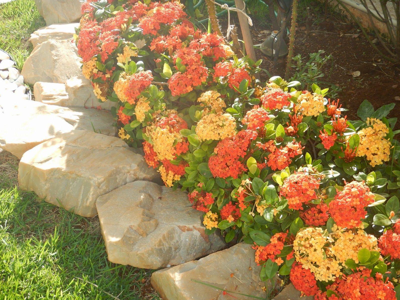 Amado Blog da Adriana Alvim: Ixora - jardim florido e protegido  JW97