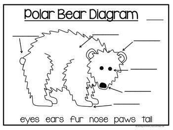 Bear diagram of kindergarten diy wiring diagrams all about polar bears non fiction writing arctic and antartida rh pinterest com simple eye diagram for kindergarten kindergarten classroom layout ccuart Choice Image