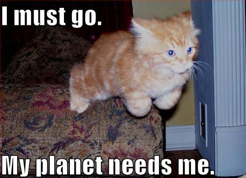 Cat-tain planet. He's a hero. | Cat memes, Cat pics, Funny cats