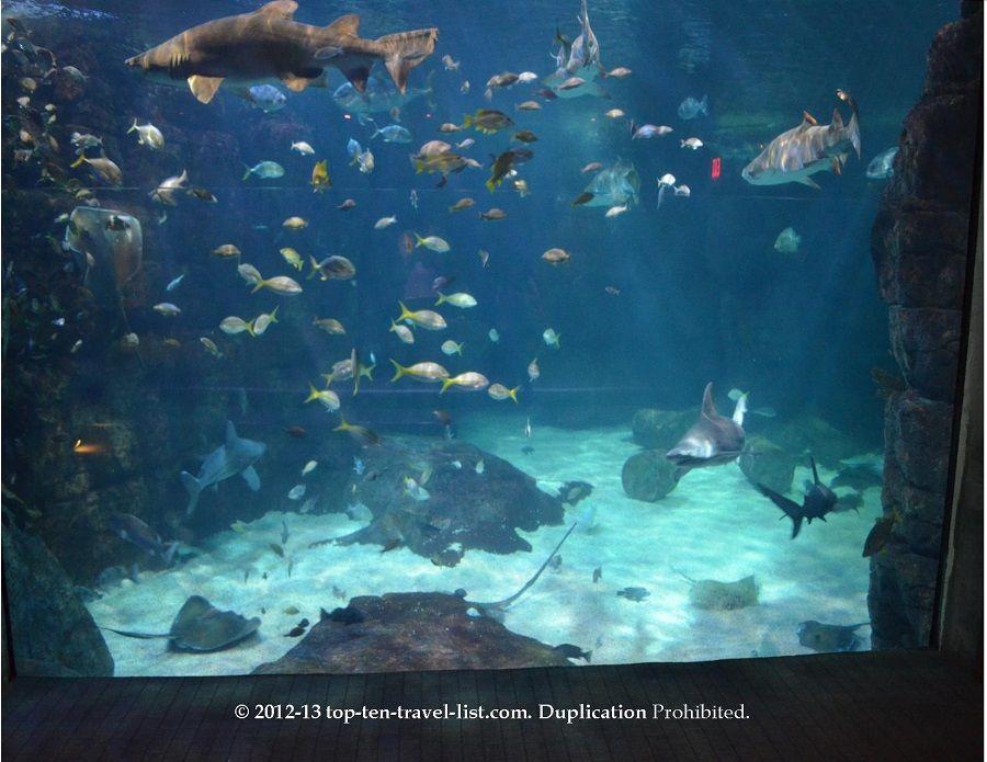 The Virginia Aquarium & Marine Science Aquarium - Top Ten ...
