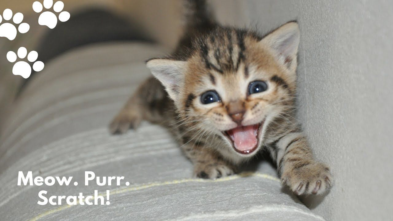 Pin On Cute Funny Kittens Cats