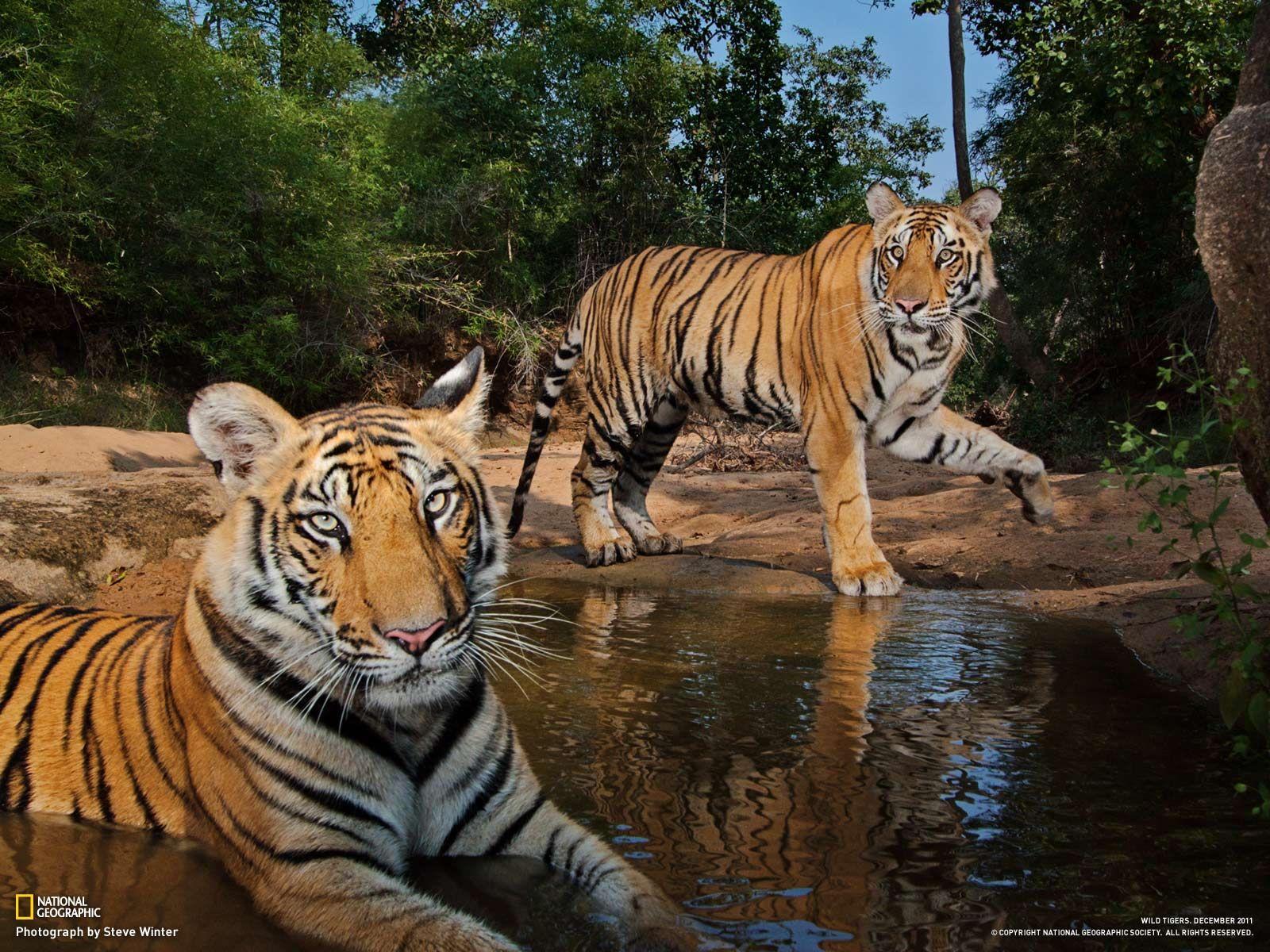 National geographic wild animals download wallpaper - National geographic wild wallpapers ...