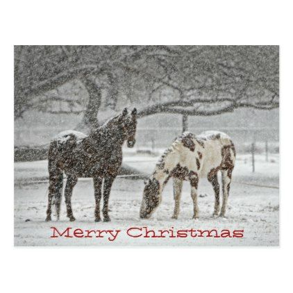 Moment Of Equine Exuberance In Snow >> Horses Standing In Snow Wish You Merry Chrsitmas Holiday Postcard