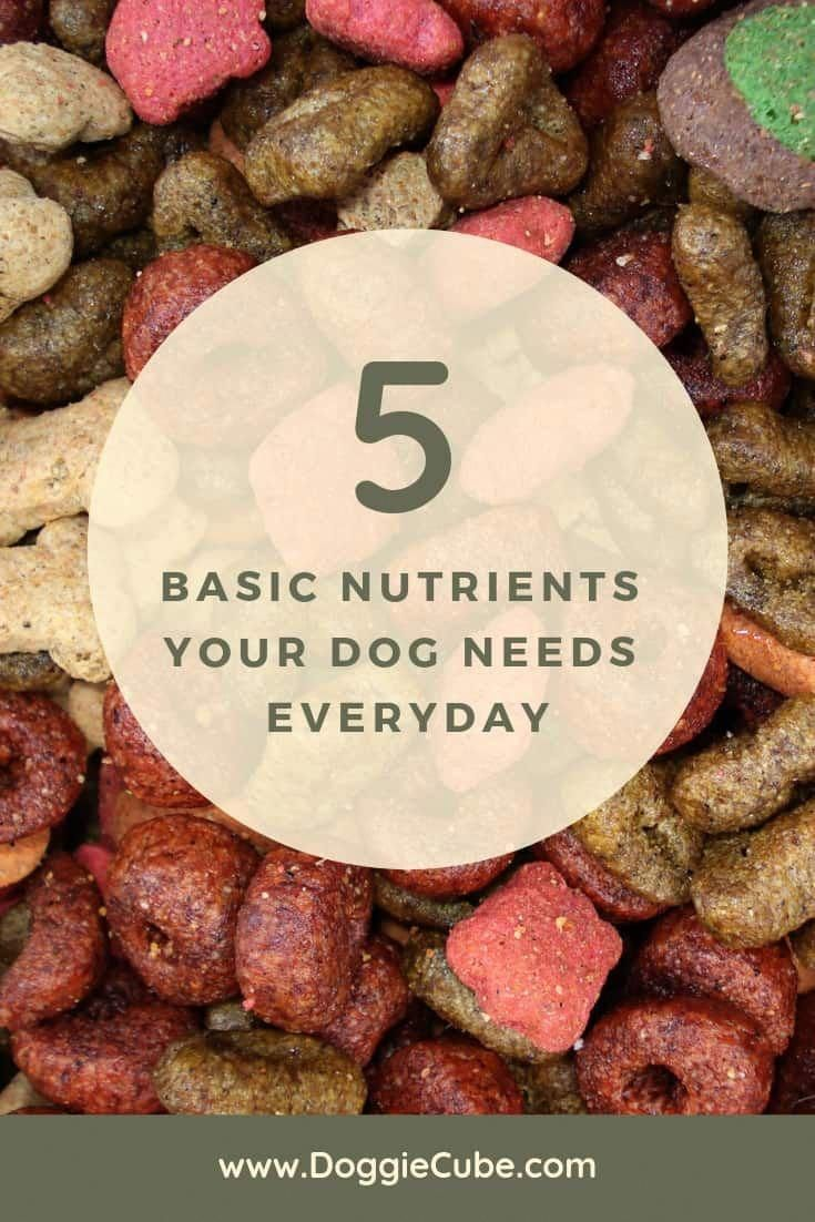 Dog Food Secrets Dog food recipes, Nutrient, Nutrition