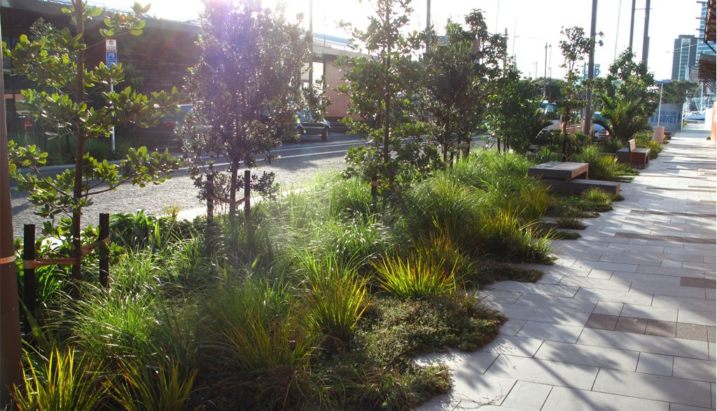 Jellicoe street north wharf wa landscape for Rain garden design