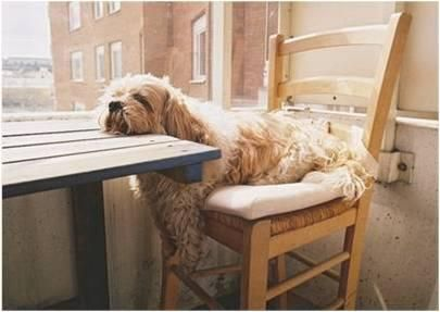 too tired to wag