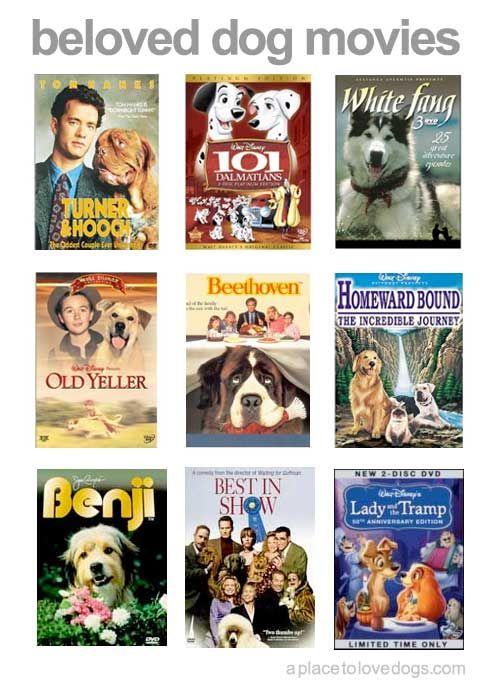 Beloved Doggie Movies Dog Movies Beloved Dog Pampered Dogs