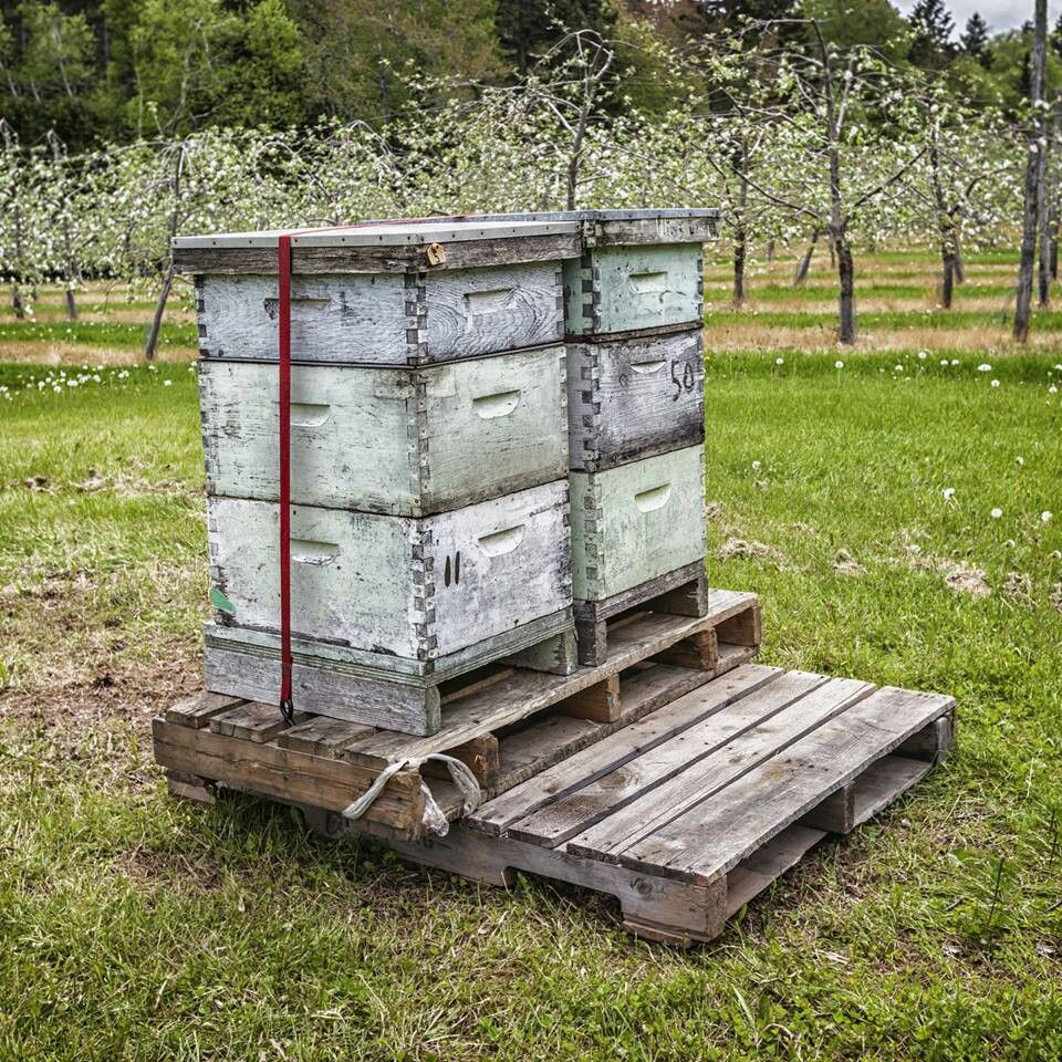 how a hive is put togeather beekeeping on soldier creek
