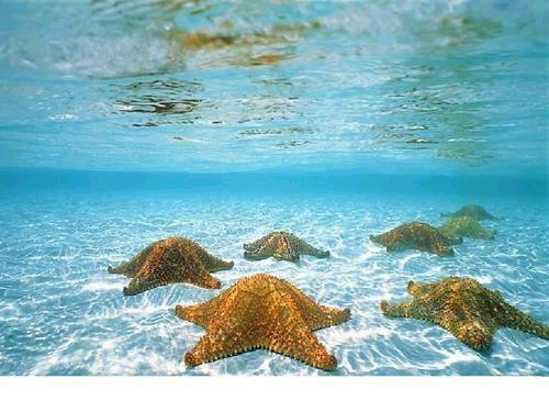 Starfish, Bora Bora, French Polynesia