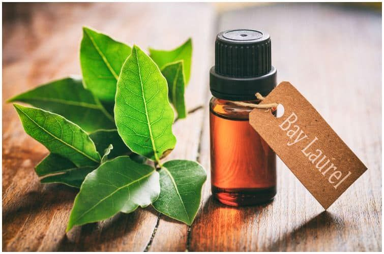 30+ 15 Essential Oils For Swollen Lymph Nodes Behind Ear, In Armpit, Neck, Throat, and Groin   Health Guide Net