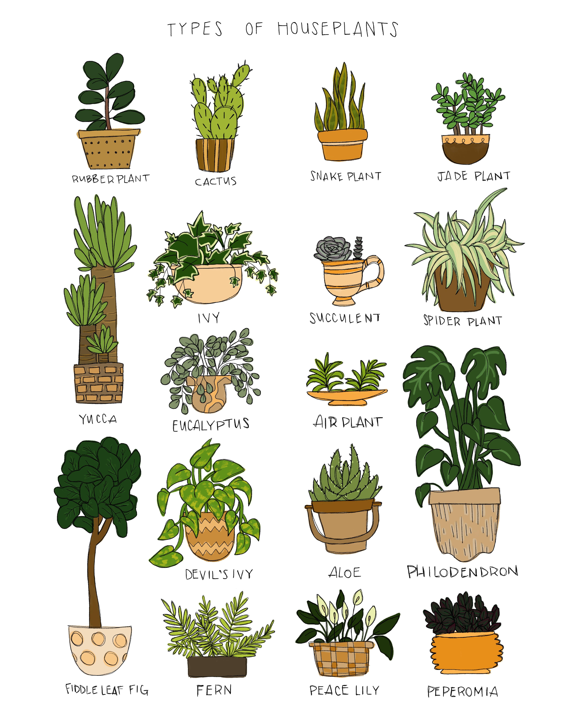 Type Of Houseplants Print On Etsy
