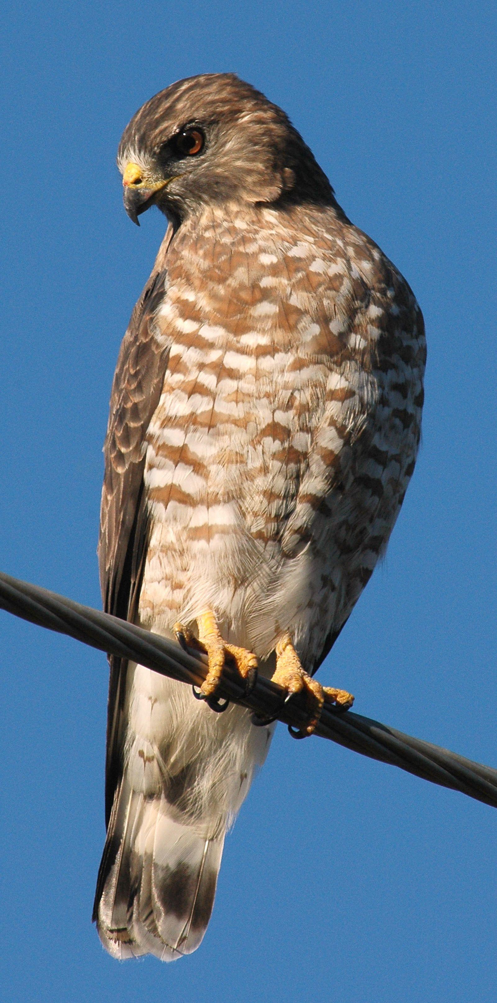 Week of April 12th - 18th | Bird sightings, Backyard birds ...